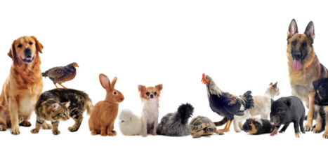 conseils-animaux-compagnie
